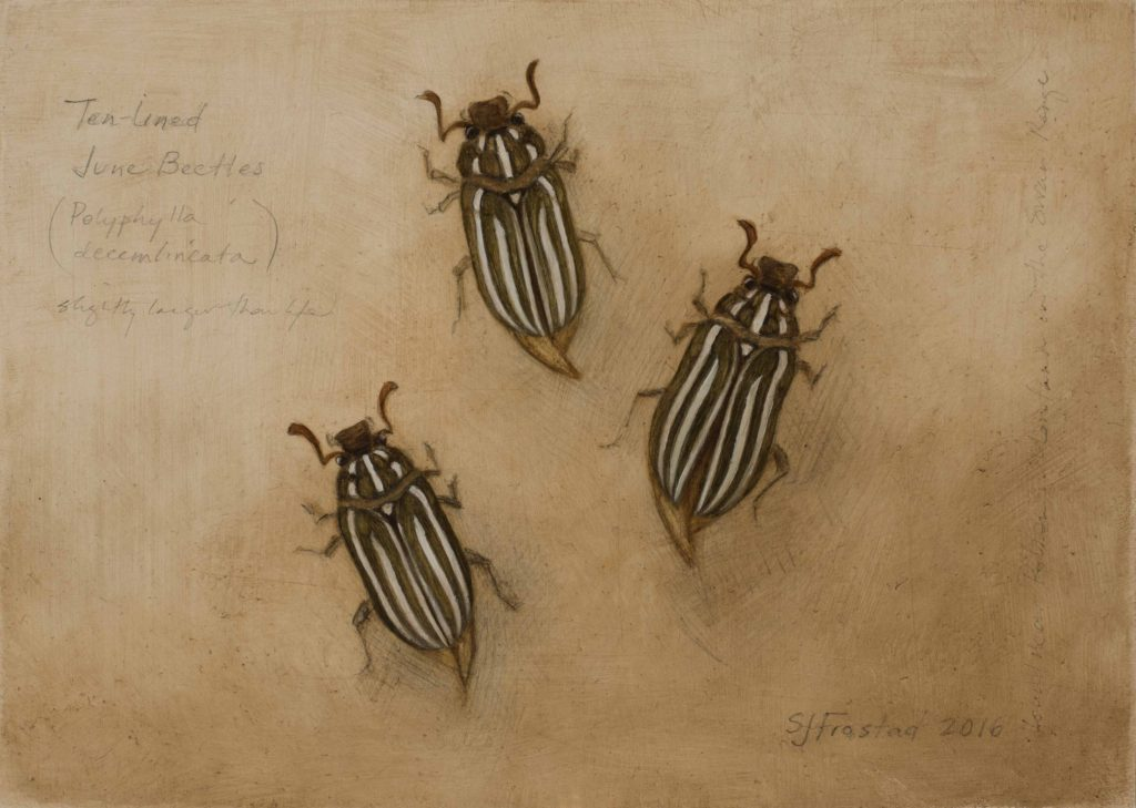 "Ten-lined June Beetles, 2016. Graphite & oil on wood panel, 5x7"". Sold"