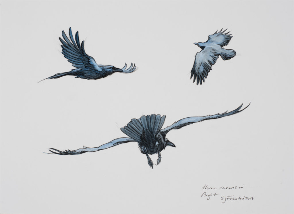"Three Ravens in flight, 2018. Mixed media on paper, 8x10"". Sold"