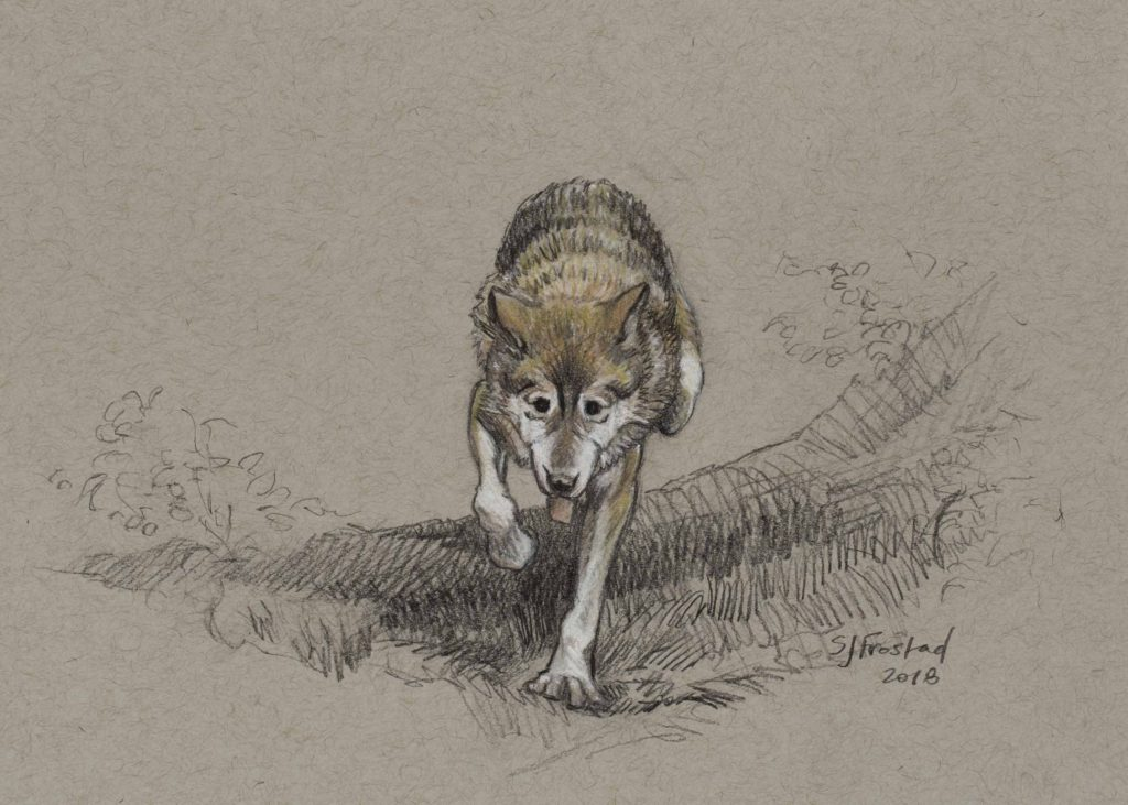 "Grey Wolf, 2018. Graphite & chalk on paper, 5x7"". Sold"