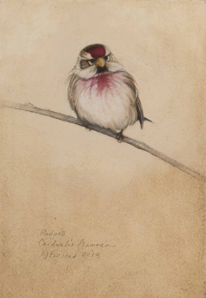 "Redpoll, 2018. Graphite & oil on art board, 6x4"" Sold"