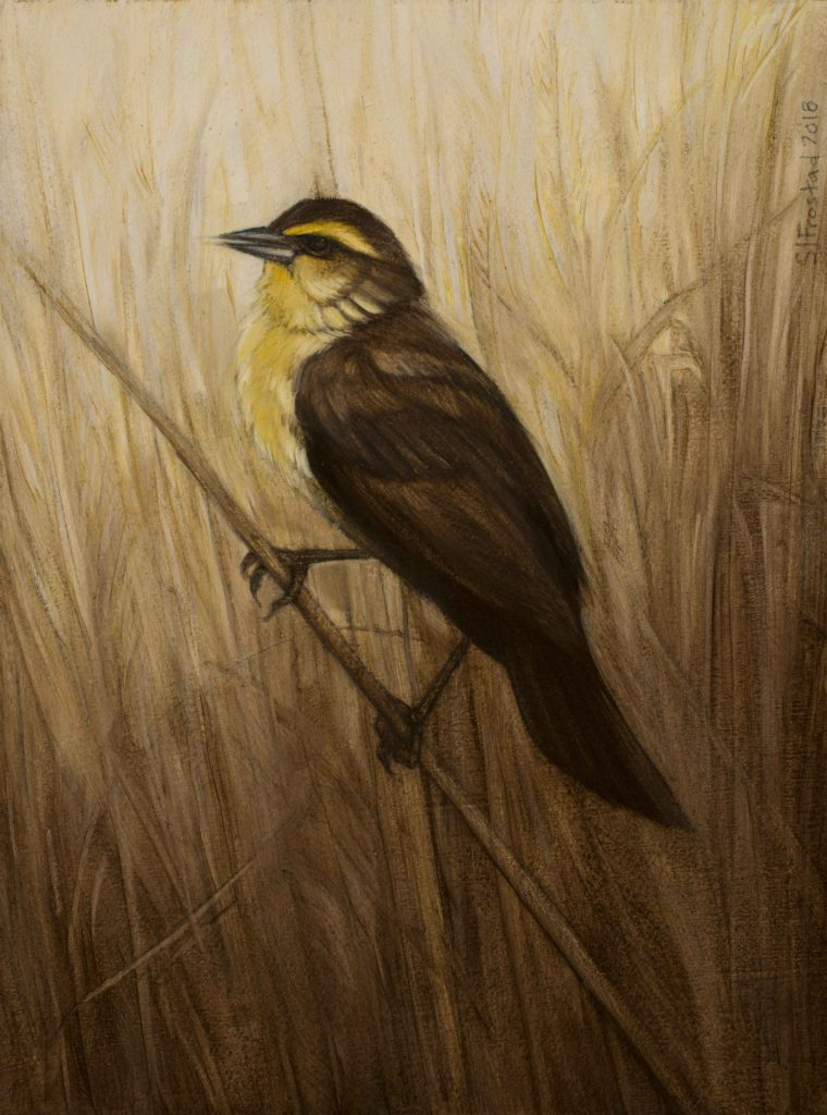In the Reeds, 2018. Graphite & oil on art board, 8x6""