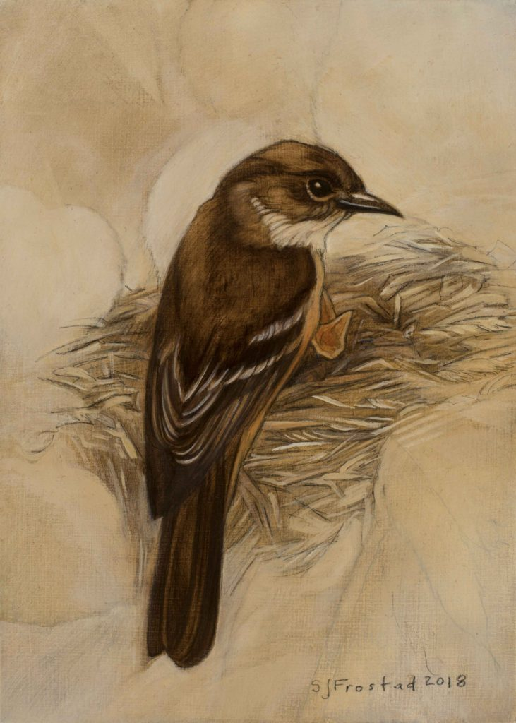 "Phoebe on the Nest, 2018. Graphite & oil on wood panel, 7x5"" Sold"