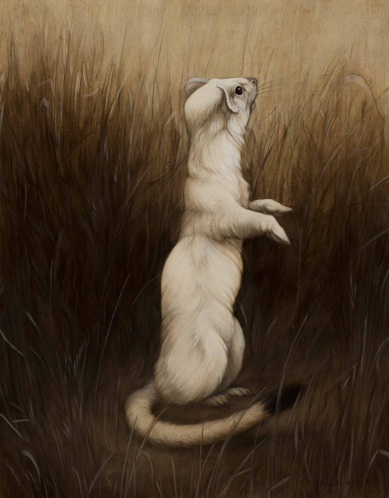 "Long-tailed Weasel, 2018. Graphite & oil on wood panel, 14x11"". Sold"
