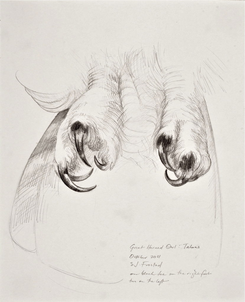 """Great-horned Owl: Talons, 2011. Graphite on paper, 10x8""""."""