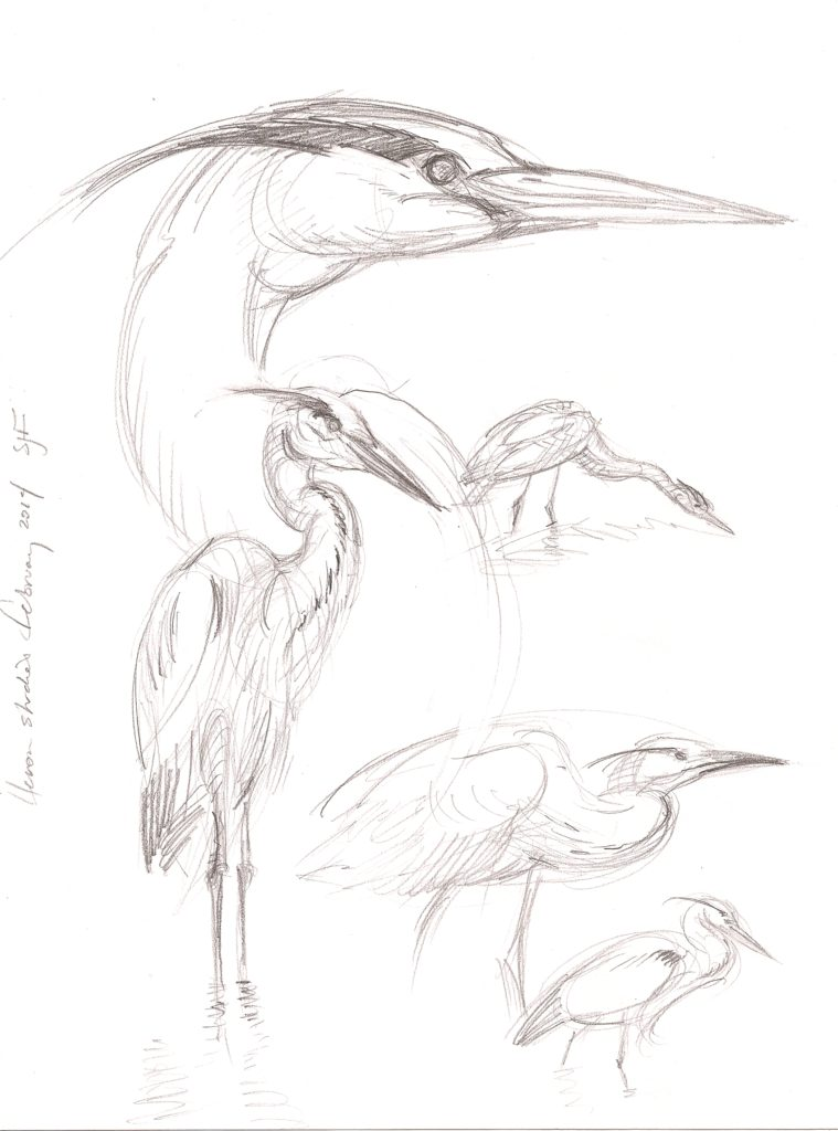 "Heron Studies, 2014. Graphite on paper, 10x8"""