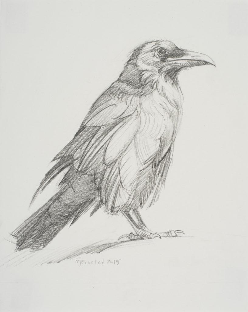"Sun-struck Raven, 2015. Graphite on paper, 10x8"""