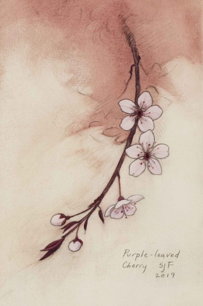 "Purple-leaved Cherry, 2019. Graphite & oil on art board, 6x4""."